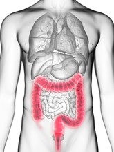 Illustration Of A Man's Colon