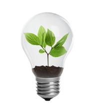 Seedling In Light Lamp On Whit...