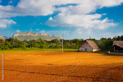 Tobacco farm in Vinales Cuba Tablou Canvas