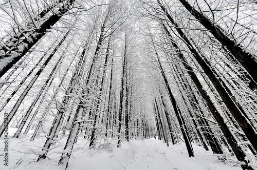 Fotografía  눈덮인 나무 숲
