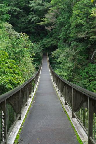 Canvas Prints Bridge Bridge of the Mitarai ravine Nara,Japan.