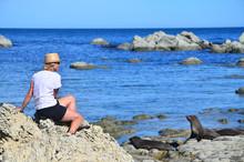 Woman Watching Seals, New Zeal...