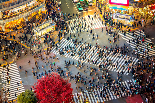 Spoed Foto op Canvas Tokio Shibuya Crossing from top view