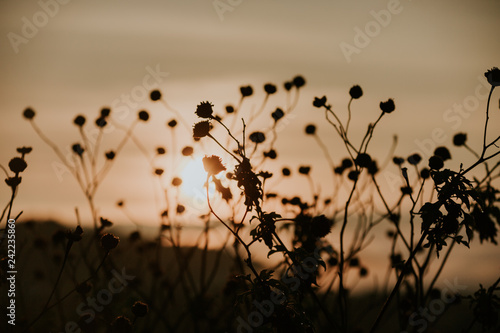 Poster Oranje eclat Background with weeds and magic of light at twilight in the autumn, colorful picture use for design advertising, printing and more