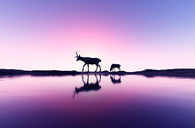 3d Rendering Of Deer And Her Baby Fawn In Seashore Landscape