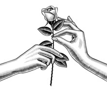 Woman's Hand Give Red Rose Into Other Hand