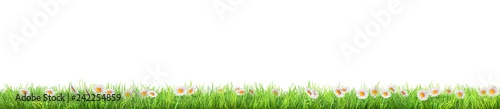 a green grass with daisy flowers isolated