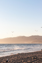 Flying Seagulls Before Sunset At Malibu Beach
