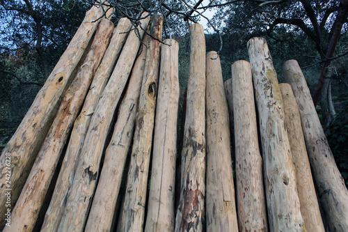 Fotografia, Obraz  Pali in legno in fila all'aperto