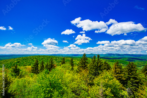 Tuinposter Donkerblauw Forest View with Blue Sky