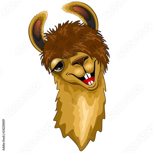 Tuinposter Draw Llama Funny Happy Face Cartoon isolated on White Vector Illustration