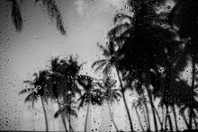 Rainy Weather On Tropical Isla...