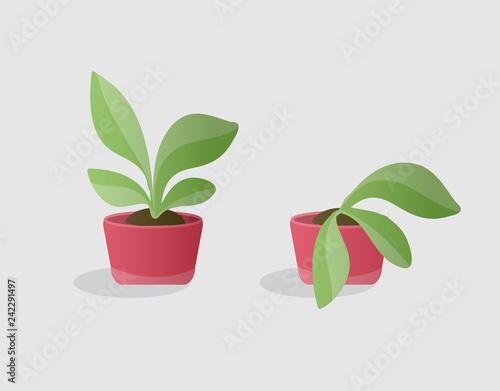 Valokuvatapetti green and wilted plants