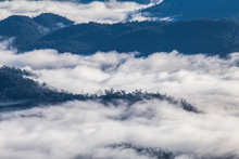 Sea Of Mist In Huai Nam Dang N...