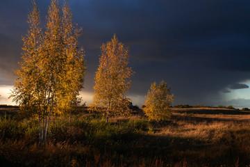 Panel Szklany Drzewa Autumn