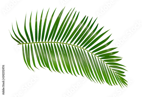 green palm leaf isolated on white background with clipping path Wallpaper Mural