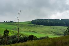 Farms Alongside The Karkloof River.