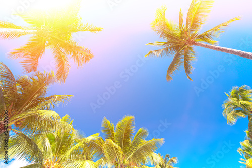 Fotobehang Aan het plafond Palm trees at blue sunny sky background. Free space for your text. Vacation background.