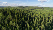 Aerial View Of Beautiful Fir F...