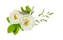 White Wild Rose On A White Bac...