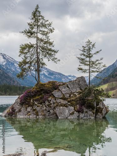 Foto  Baum auf Felsen