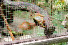 Squirrel Jumping On The Dry Tree In The Cage