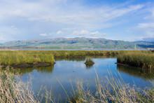 View Towards Mission Peak; Waterways At; Don Edwards Wildlife Refuge, South San Francisco Bay, Alviso, San Jose, California