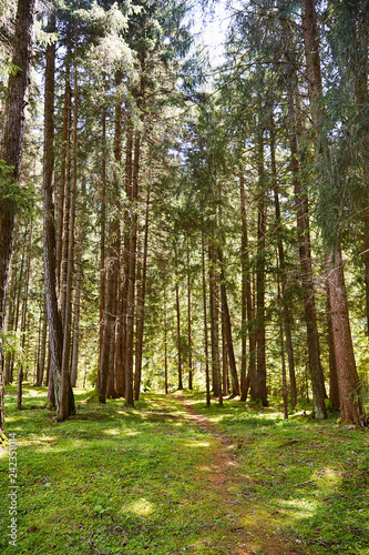Poster Printemps Forest path in Toblach municipality at daylight