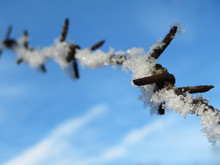 Rusty Barbed Wire Covered With Snow On Blue Sky Background. Concept Of Boundary, Prison, Immigration Or Freedom