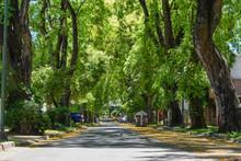 Calle En Perspectiva Con Mucha Sombra, Rodeada De Altos árboles Y Flores Amarillas En El Piso
