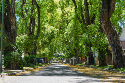 Calle en perspectiva con mucha sombra, rodeada de altos árboles y flores amarill Canvas Print
