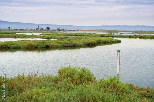 Valokuvatapetti Wetlands in Alviso Marsh, south San Francisco bay, California