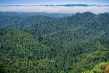 Fog Lingering Over The Hills And Valleys Of Santa Cruz Mountains, San Francisco Bay Area, California