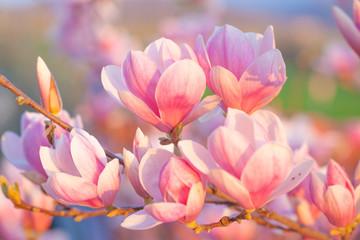 Panel Szklany PodświetlaneMagnolia blossom