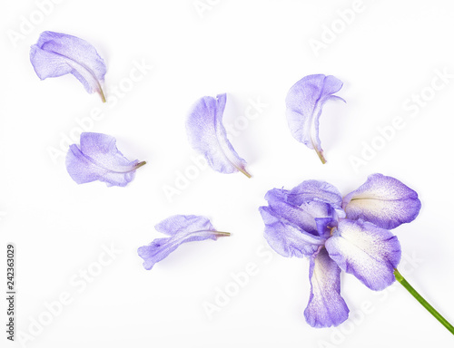 Poster Iris Purple iris flower and petals on white background. Flat lay. Top view.