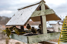 Birds In The Bird Feeder