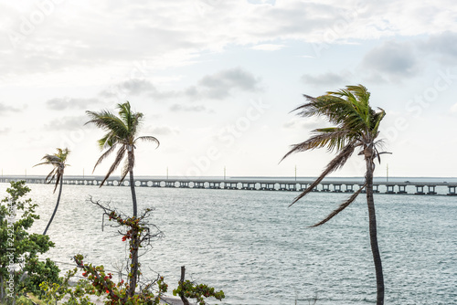 Fotografie, Obraz  Green palm tree leaves in the wind at sunset evening in Bahia Honda State Park,