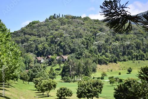 Spoed Foto op Canvas Khaki forest