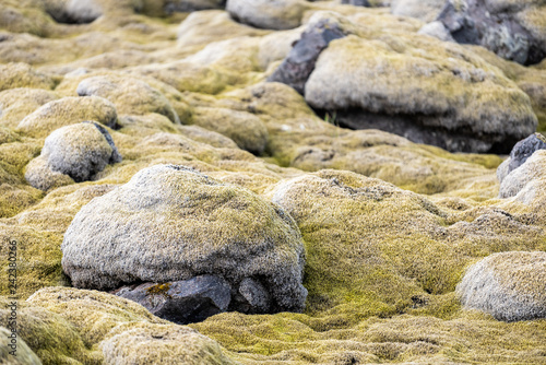 Fotografie, Obraz  Lava Field in Iceland closeup of yellow green bright moss covered rocks or stone