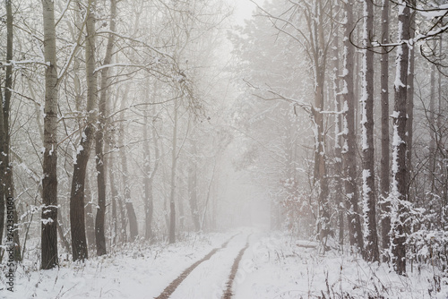 Aluminium Prints Landscapes Road in snowy winter forest this is fairytale scene