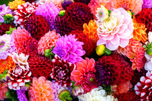 Bright Bunches Of Colorful Pom...