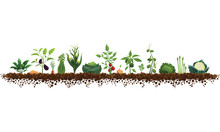Large Vegetable Garden Illustration