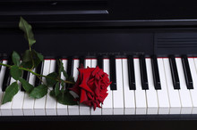 Red Rose And Piano Keyboard