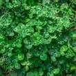 Tropical green leaf background.