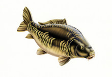 Carp Fish Bald Without Scales Isolated Airbrush