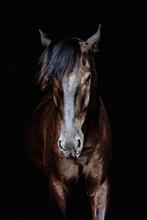 Black Horse Portrait Isolated ...