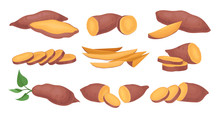 Flat Vector Set Of Whole And Sliced Sweet Potatoes. Ripe And Tasty Vegetable. Natural And Healthy Food. Raw Batat