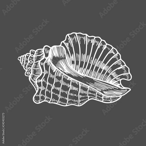 engraving illustration of spiral seashell Canvas Print