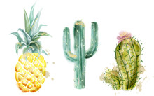 Pineapple And Cactus Set Vector Watercolor. Exotic Tropic Collection Painted Styles