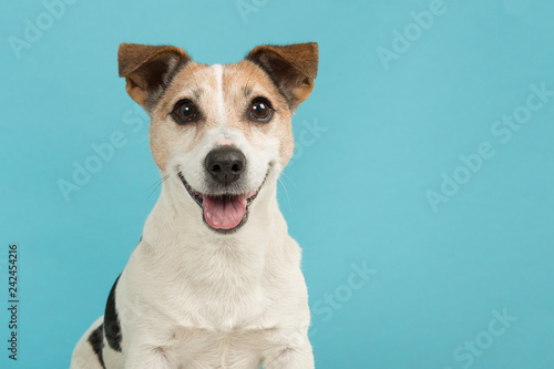 Obraz Portrait of a cute smiling Jack Russell terrier dog seen from the front on a blue background - fototapety do salonu
